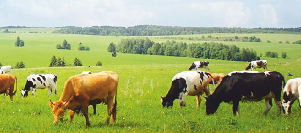 Dairy Livestock, Fish & Poultry Industry in India